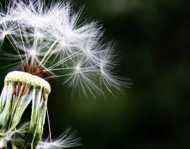 9 consejos para afrontar la alergia al polen
