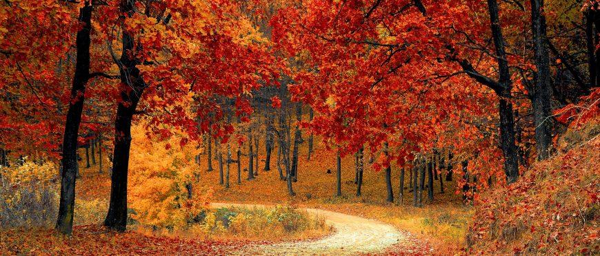 """El """"baile de temperaturas"""" provoca las enfermedades más comunes del otoño"""
